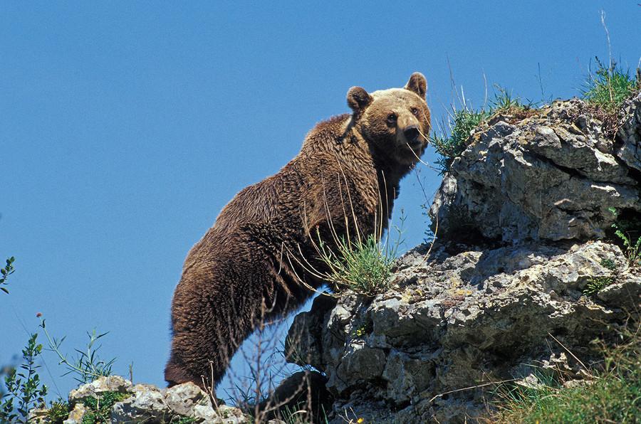 Asturias tierra de osos - Donde viven los acaros ...